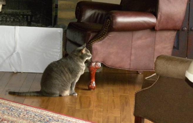 Manny McCoy Canton South cat pet memorial