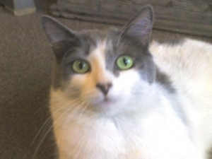 Daisy the Cat of Audrey's Attic in Orrville, Ohio, and namesake for April's Daisy Drawing to win big savings