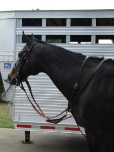 Race Horse Stuff_Reins