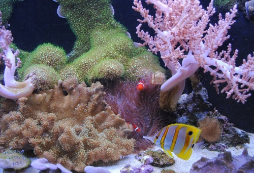 Visit aquatic technology for saltwater fish other for Fish tank supplies near me