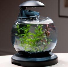 aquarium office. Www.squidoo.com Aquarium Office