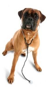 Belpar Pet Care Centre_Doc Dog