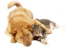 Belpar Pet Care Centre_cat and dog