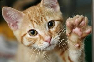 Uniontown Veterinary Clinic_cat paw
