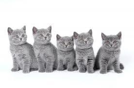 Uniontown Veterinary Clinic_cats