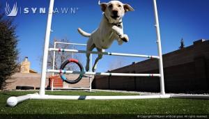 SYNLawn_Pet Training