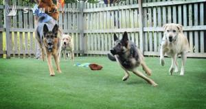 SYNLawn_Dog Run2