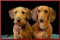 belpar pet care centre_dog mascots