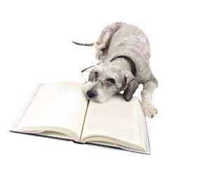 uniontown vet _dog with book