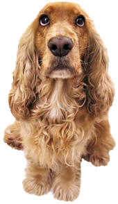 Uniontown_Dog
